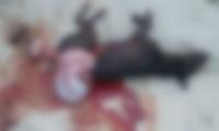 El cuerpo del animal quedó tendido en una acera en la Avenida del Libertador.