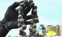Comprar huevos de iguana puede ser un delito tan grave como venderlo.