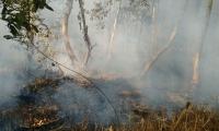 El incendio al parecer fue ocasionado por cazadores.