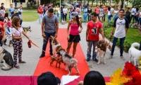 Los caninos que participaron y desfilaron ante los asistentes y el jurado calificador.