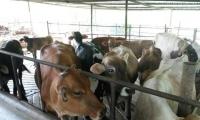 En Santa Marta funciona un matadero regional en la zona de Gaira con todas las especificaciones establecidas en la ley.