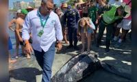 Bióloga y autoridades inspeccionando a la tortuga