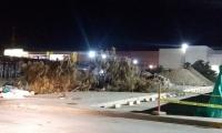 En esta foto se ve la tala de algunos árboles en el parqueadero del Buenavista.