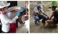 Vacunación de felinos y caninos contra la rabia