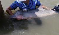 La Policía participó en el operativo de rescate del delfín en Puerto Velero.