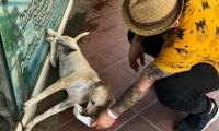 Perro callejero en El Rodadero.