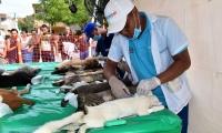 Jornada de esterilización a caninos y felinos en Santa Marta