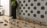 Caracoles y estrellas de mar incautadas por la Policía
