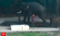 Hombre muere en la India mientras bañaba a Elefante
