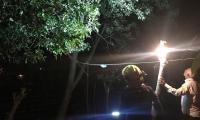 Bomberos rescatan a joven que amenazaba con lanzarse de un árbol