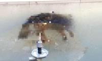 El perro murió en una fuente congelado por las temperaturas.