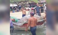 Pescas de especies en vía de extinción