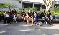 Campaña para cuidar y adoptar animales callejeros