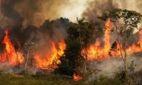 Incendios en la amazonía brasileña.