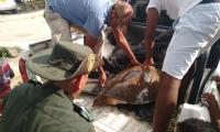 Rescate de tortuga Carey