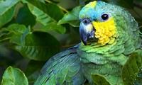 Aves en la Quinta de San Pedro Alejandrino.