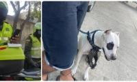 Policías le impusieron multa al joven por sacar a su perro a hacer necesidades a 2 cuadras de su casa.