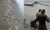 Mortandad de peces en Zapayán y San Zenón.