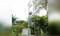 Transformador ilegal en Zona Bananera.