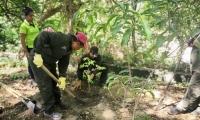 El objetivo es sembrar unos 4 mil árboles nativos en el complejo deportivo Villa Bolivariana y otros 4 mil a lo largo del Distrito.