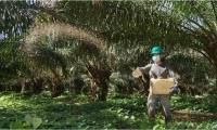 El sector palmero refuerza los protocolos de bioseguridad emitidos por el Ministerio de Salud y Protección Social, los mismos que están orientados a la cadena agroindustrial de la palma de aceite y a las zonas palmeras del país.