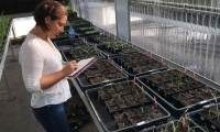 Los estudios buscan evaluar la relación entre herbicidas y sistemas agrícolas.