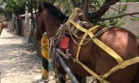 El caballo fue encontrado en Villa Betel.