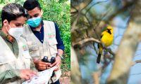 Unimagdalena: ecosistema indispensable para la diversidad de aves en la región.