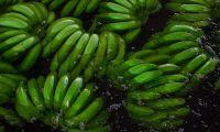 El puerto que exportó la mayor cantidad de fruta en la región fue el de Santa Marta.
