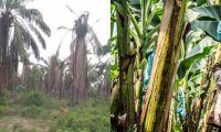 Con este proyecto de ley se busca proteger la agricultura nacional.