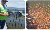 En Ciénaga Grande, el ICA promueve el registro de predios piscícolas.