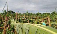 Cultivos se vieron afectados por lluvias.