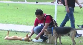 Miembro de los Guardianes Caninos alimentando a uno de las mascotas de la Universidad.