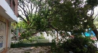 Lugar donde se cayó el árbol sobre las redes de energía.