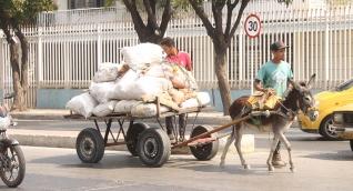 Vehículos de tracción animal en Santa Marta