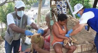 Gran Jornada de vacunación masiva antirrábica canina y felina.