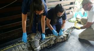 Atención del caimán en el zoológico.