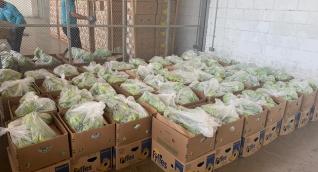 La droga fue incautada en un cargamento de banano que iba a ser exportado a Bélgica.