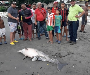 Un delfín muerto y en avanzado estado de descomposición fue detectado este miércoles cerca del muelle de Puerto Colombia.