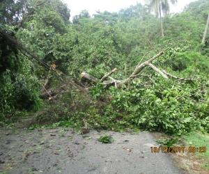 Caída de árboles en el Parque Tayrona