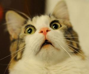 """""""La investigación está relacionada con el hurto de varios gatos, entre los que figura el del cura del pueblo."""