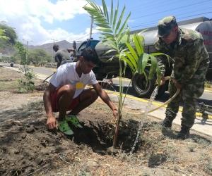 Fueron sembrados ceibas, robles, guayacanes, carretos y 30 palmeras.