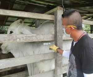 El Instituto Colombiano Agropecuario, ICA, estableció la obligatoriedad de la vacunación contra la rabia de origen silvestre en 13 municipios del departamento del Cesar.