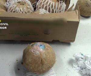 Estos son los cocos a los que se le sacó el agua y se le inyectó la cocaína líquida.
