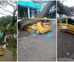 Así quedó el taxi que recibió el impacto del árbol caído.