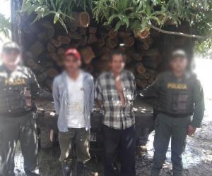 Capturados por tala y transporte de madera ilegal