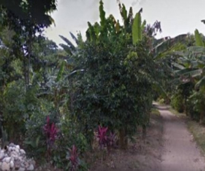 Presencia de un tigre tiene en alerta a habitantes de área rural de Santa Marta.