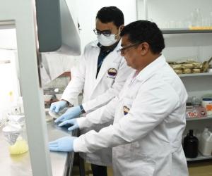 Los investigadores realizaron las pruebas en laboratorio para descubrir el fungicida que ataca la Sigatoka negra.