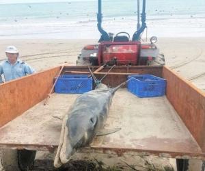 El animal fue enterrado con el fin de evitar afecciones a la salud y al ambiente.