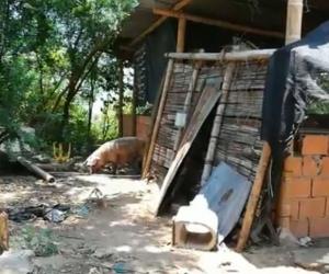 'Casa de pique' descubierta en Flandes, Tolima.